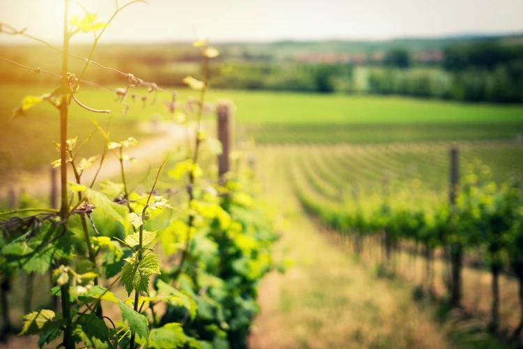 Syndicats viticoles : comment se distinguer sur internet par le contenu