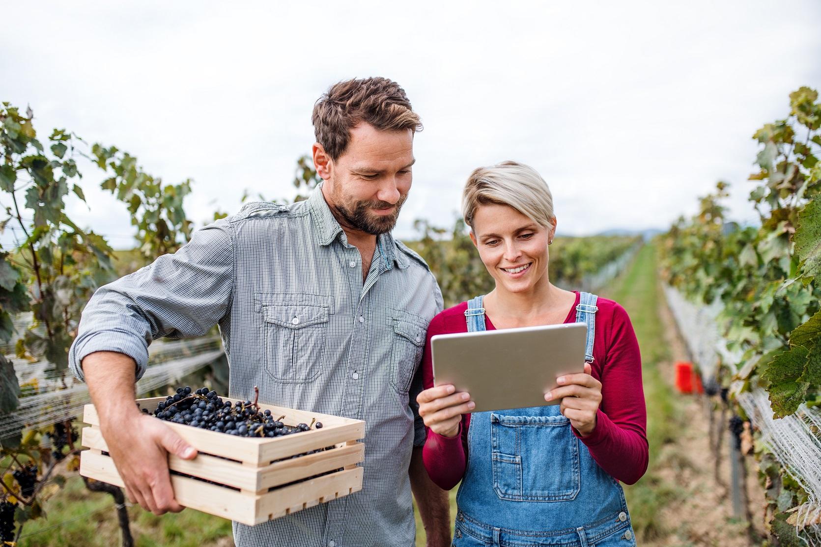 Pourquoi est-il efficace de faire appel à une agence de communication spécialisée pour votre vignoble ?