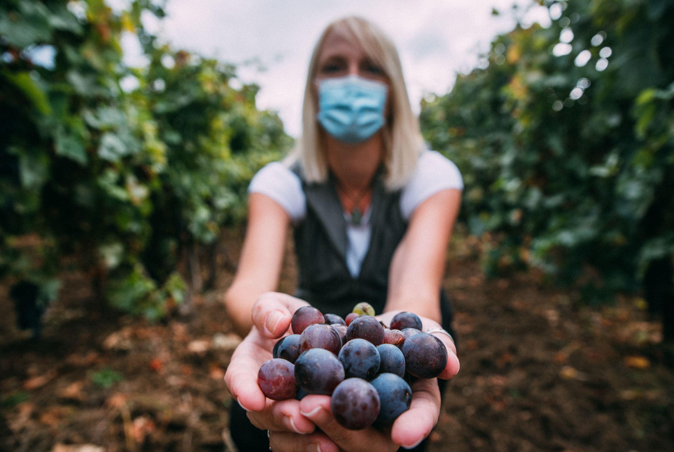 Coronavirus : comment le monde du vin s'adapte-t-il au confinement ?