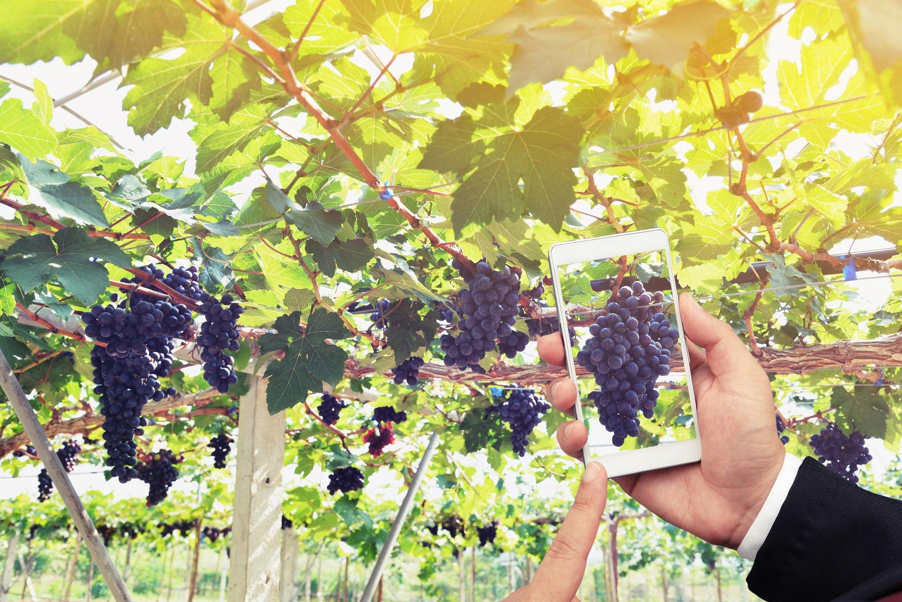 Vignobles et châteaux : 4 erreurs à ne pas commettre sur les réseaux